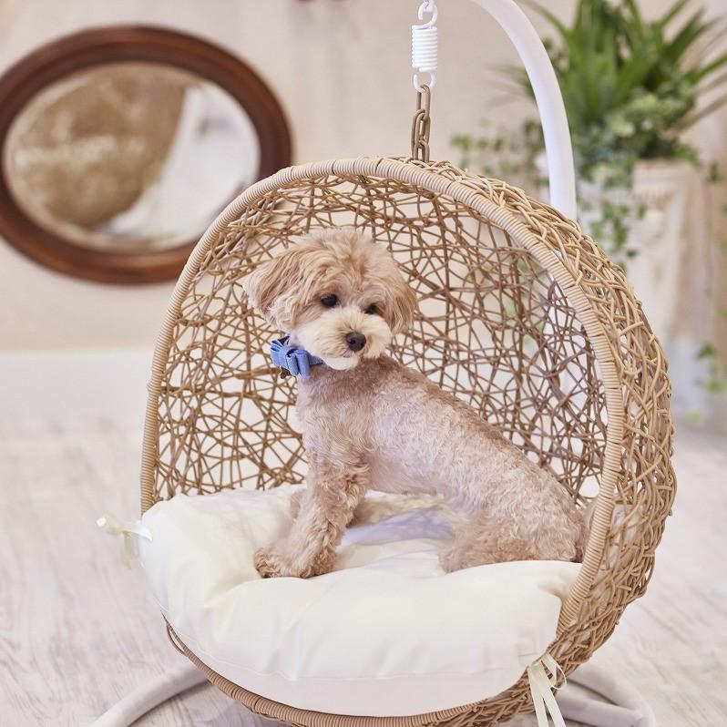 ★ペット同伴ルーム★【基本】旧軽井沢に愛犬も嬉しいResort&Pet Hotel※小〜大型犬まで可