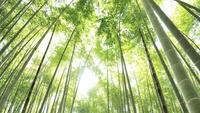 【朝食付/観光タクシー】◆観光に最適◆古都鎌倉の名所を効率よく巡る<3時間コース>