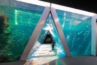 【コネクティングルーム】アクアマリンファミリー♪140cm幅ベッド【朝食付き】