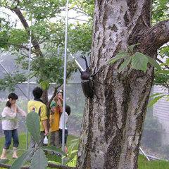 ◆【石川県ふれあい昆虫館・入場券付き】昆虫宝島、体験隊プラン《朝食付》