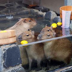 ◆【いしかわ動物園・入園券付き】わくわくプラン ⊂(・(ェ)・)⊃ (朝食付)