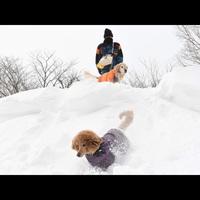 冬の那須で雪遊び!ワンちゃんと一緒にスノーシュー体験♪夕食はイタリアンフルコース☆