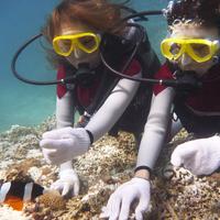 【青の洞窟体験ダイビングツアー】沖縄で人気のブルーホールを体感!