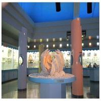 世界の貝が大集合!シェルミュージアム「海宝館」入場券滞在中1回付き
