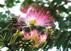 【みんなでカンパイ!広島県】自然志向♪新緑の野山、小鳥のさえずり小さな花に出会い、清々しい風と遊ぼう