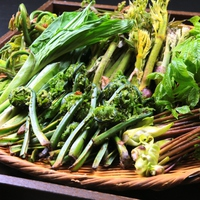 【春の味覚】ちょっくら採ってくるわ!採りたて新鮮な山菜料理を食べられるプラン♪≪2食付≫