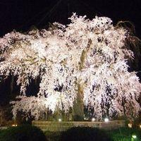 【京のお花見プラン◆素泊り】古都で満開の桜を楽しむ♪花見名所マップ付き<烏丸御池駅から徒歩1分>