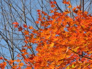 【カップルプラン】《10月〜12月≫北軽井沢の秋を堪能!ペットと一緒に紅葉を満喫!