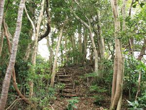 【シンプル素泊まりプラン♪】天城百年杉のログハウスで自然を満喫しよう!