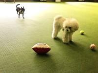 【ディナー19:30〜】 愛犬との寛ぎ空間 〜料理長の創作料理を愛犬と共に〜