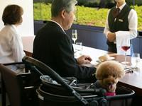【スタンダード】 愛犬と一緒にフレンチのフルコースを愉しむ 寛ぎの空間と温泉で癒されて 1泊2食付