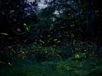 初夏の夜に天舞うホタル♪幻想的な風景まで徒歩10秒【朝食付きプラン】
