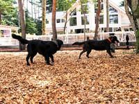 【素泊まり】軽井沢の愛犬と泊まれるホテル<広大な共用ドッグラン無料>