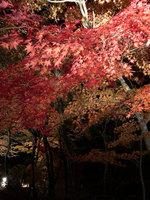【GoTo対象】紅葉祭り始まります!運が良ければダイアモンド富士もみれる?!温泉チケット付お得プラン