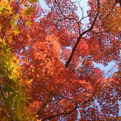 ★秋の大収穫祭★食欲の秋におすすめ!個室でゆっくり味わう、当館名物『雲海鍋』&特典付プラン【2食付】