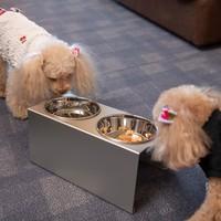 【NewLocalStay★九州在住者様限定】愛犬と近場でお泊り!地元応援の選んで嬉しいお楽しみ券付