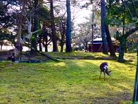 連休も価格据え置き!奈良の木・吉野杉の香る歴史的風致形成建造物に宿泊〈一味違う古都の旅♪〉