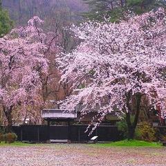 桜の街 ☆ みちのくの小京都 角館 春めぐり プラン♪≪朝食付き≫≪事前カード決済専用≫