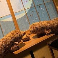 【1日1室限定】世界最大級の両生類!オオサンショウウオ満喫プラン
