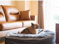 【愛犬と一緒に宿泊/二食付】1匹目無料!小〜大型犬OK!ドッグラン無料!ご夕食は和フレンチコース♪