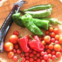 【皆で野菜収穫!】当宿の畑には様々な野菜や果物がたっくさん★《2食付》※野菜収穫体験料別途必要※