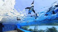 サンシャイン水族館入館券付。再開発が進む「豊島区・池袋」をお楽しみください。