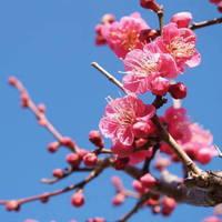 【富士屋旅館1周年記念】一足早い春の訪れを堪能!湯河原の梅を楽しむ2大特典付♪1泊2食付プラン