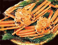 ●豪華タグ付き越前ガニフルコースプラン ●茹で、刺し、炭火焼、鍋、雑炊、せいこ蟹(メス蟹)を満喫!