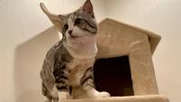 【直前割30%オフ】【猫と泊まれる】☆猫ちゃんグッズ満載&温泉付☆庭でBBQもOK♪貸別荘コテージ