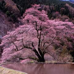 【3〜5月◆季節を味わう】春は華やか!「豪華味覚会席」プラン