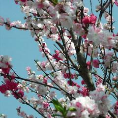 【春の香りの御馳走を☆】信州が味わえる季節限定!  山菜会席コース