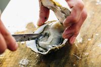 【11月〜3月期間限定!】濃厚な旨味!広島ならではの美味【牡蠣フルコース】