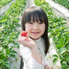 【真っ赤なイチゴが食べ放題】いちご狩りチケット付☆渦潮会席お部屋食プラン♪【春得】