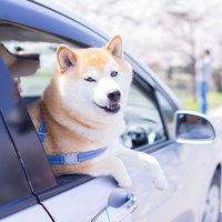 【小〜中型犬専用】<ペットと泊まる海辺の宿>ドッグラン併設!三陸海岸の朝日と部屋食◎<朝食付