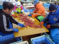 【冬期限定】 ぷりっぷり西海漁港直送 新鮮甘エビ踊り食いとミニ舟盛プラン