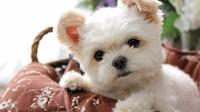 【春夏旅セール】愛犬と泊まれる 1フロア貸し切りプラン