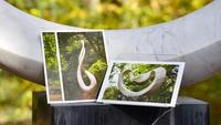 【ポストカード付き】世界を代表する彫刻家「昭島・昭和の森 武藤順九彫刻園」で四季を楽しむ■朝食付き