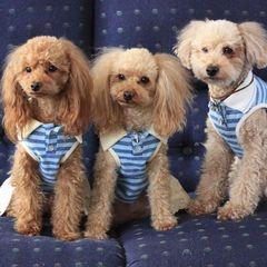 【春夏旅セール】トイプードルの愛犬家の方々と集う♪ペットプラン(トイプードルとお泊まり)