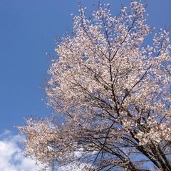 季節のおすすめボトルワイン付プラン〜★春 Spring☆〜【春得】