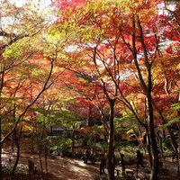 【さき楽60】平日限定 お得プラン ◆ 有馬温泉旅行を応援! / 50007-R60