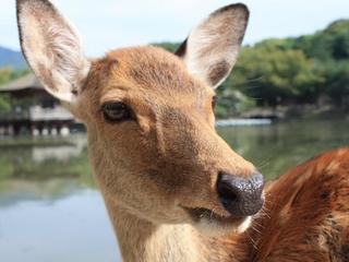 きものを着て奈良を散策しませんか?ちょっぴりあなたの思い出作りにお手伝い