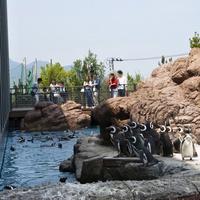 【ワクワクドキドキ!水族館へ行こう♪】上越市立水族博物館<うみがたり>入館チケット付!