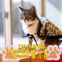 【ネコ好きさん集まれ!】肉球ぺったんこステーキプラン×ネコケーキ付☆今なら山形県産牛増量129g☆