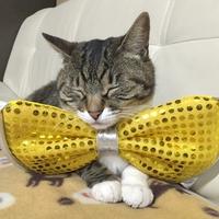 ★ねこ女将まいちゃん★看板猫ランキング全国1位受賞記念!すぺしゃるニャンキュープラン!