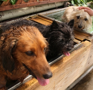 【スタンダード】ペットと過ごす!のんびりゆったり温泉旅行♪1泊2食付