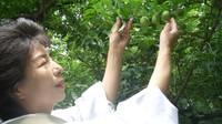 【平日限定】オリジナル梅酒付☆おかみのおすすめプラン☆夕食お部屋食☆貸切風呂3ヶ所無料で時間制限なし