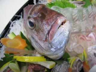 【楽天限定】 ★贅沢プランA★〜新鮮な鯛も淡路牛も両方食べたい!欲張りプラン〜☆彡