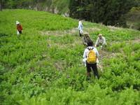 山菜採りハイキングプラン