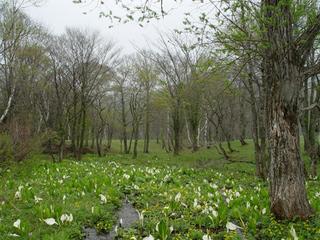 春の山野草観察プラン