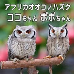 ☆掛川花鳥園プラン入園券付 ☆
